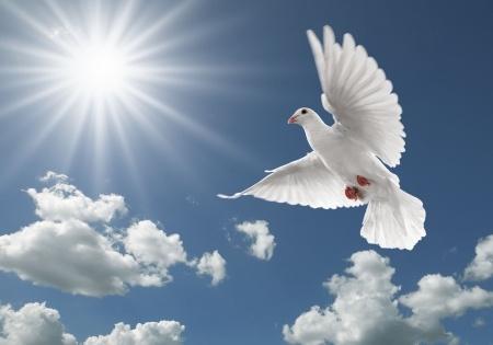 """סוכת שלום – סרט נשי ליבריה ורב שיח- תנועת נוע""""ם"""