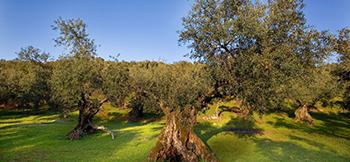"""""""שבוע שמירת הטבע"""" הפארק הביוספרי רמת מנשה"""